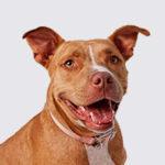 https://www.chemitec.com.br/wp-content/uploads/2019/03/cachorros-150x150.jpg