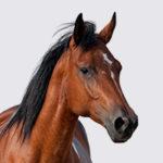 https://www.chemitec.com.br/wp-content/uploads/2019/03/equinos-150x150.jpg