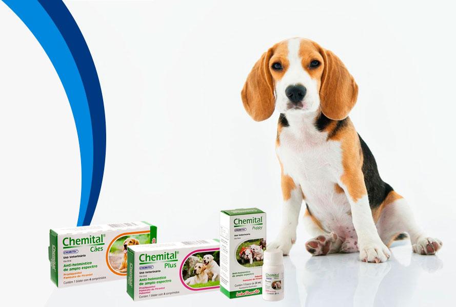 Vermífugos para cães