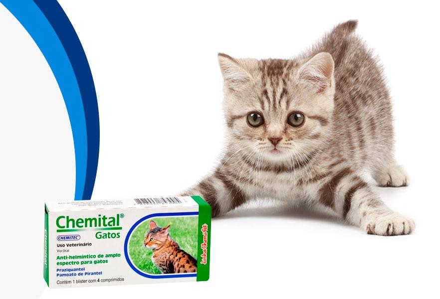 Vermífugos para gatos