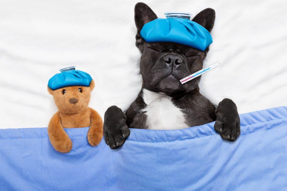 Dipirona para cachorro doente