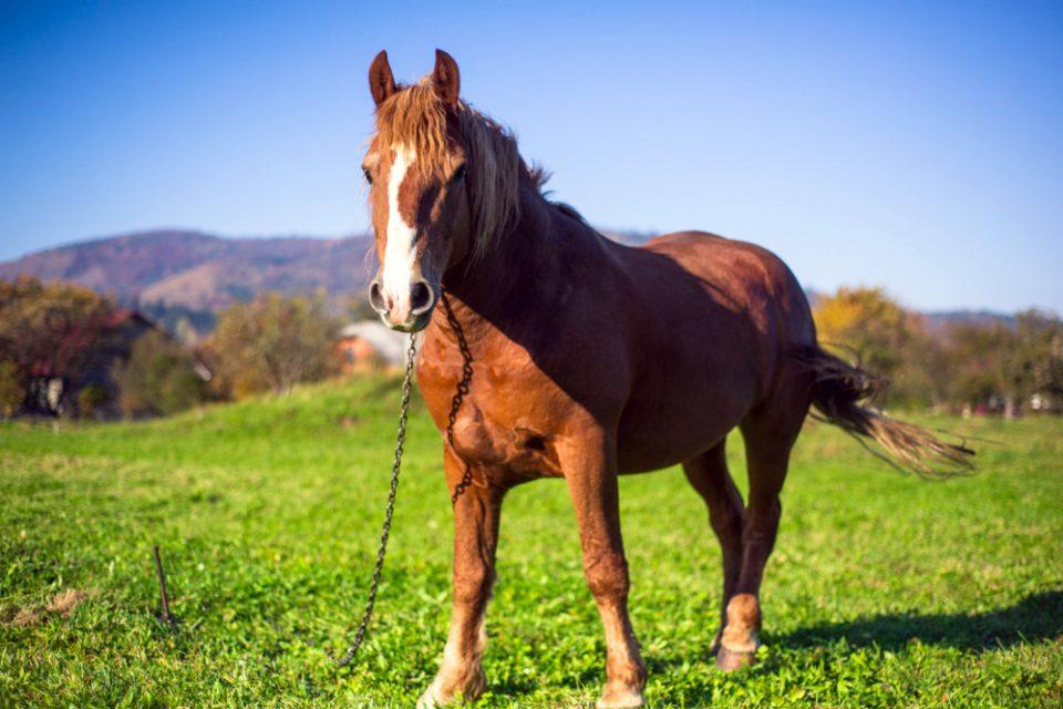 Cavalo ao ar livre com uma corrente no pescoço