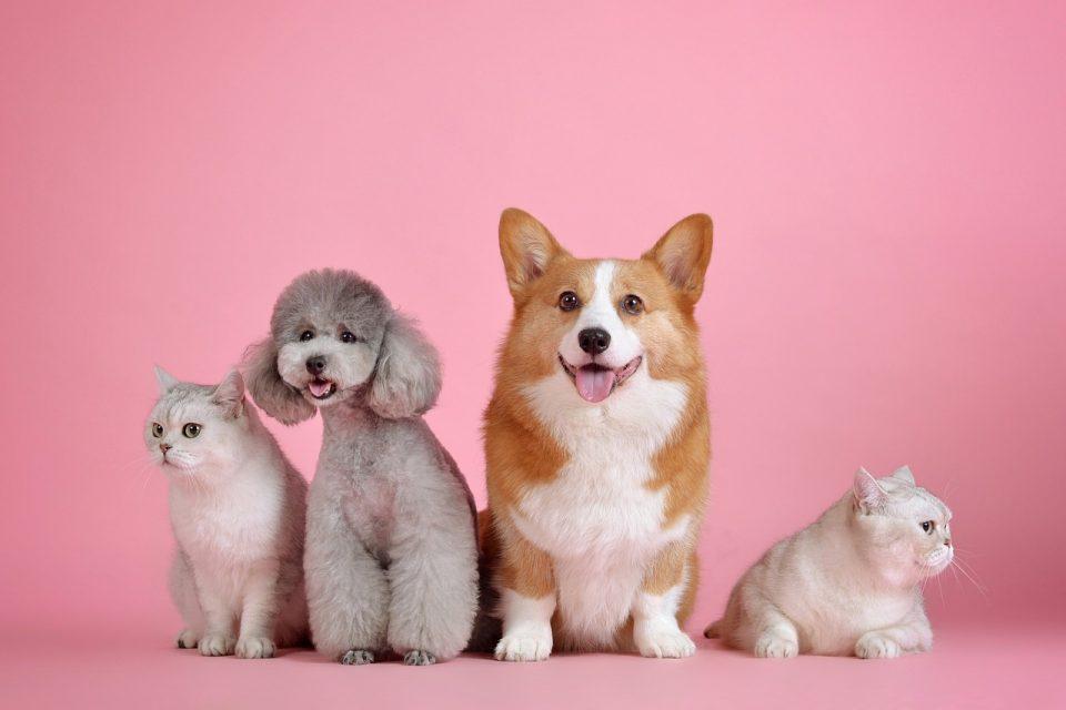 Distribuidor de produtos veterinários: Cachorros e gatos