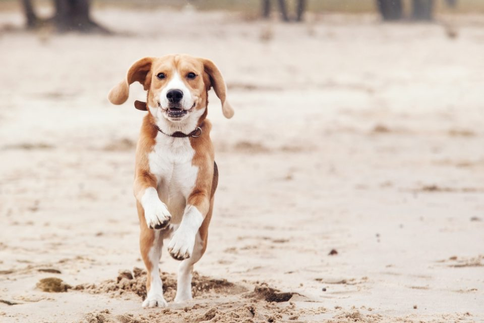Cachorro exposto ao risco do bicho geográfico